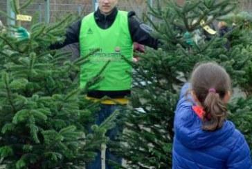ASV Hamm: Großer ASV-Weihnachtsbaumverkauf am 10. Dezember